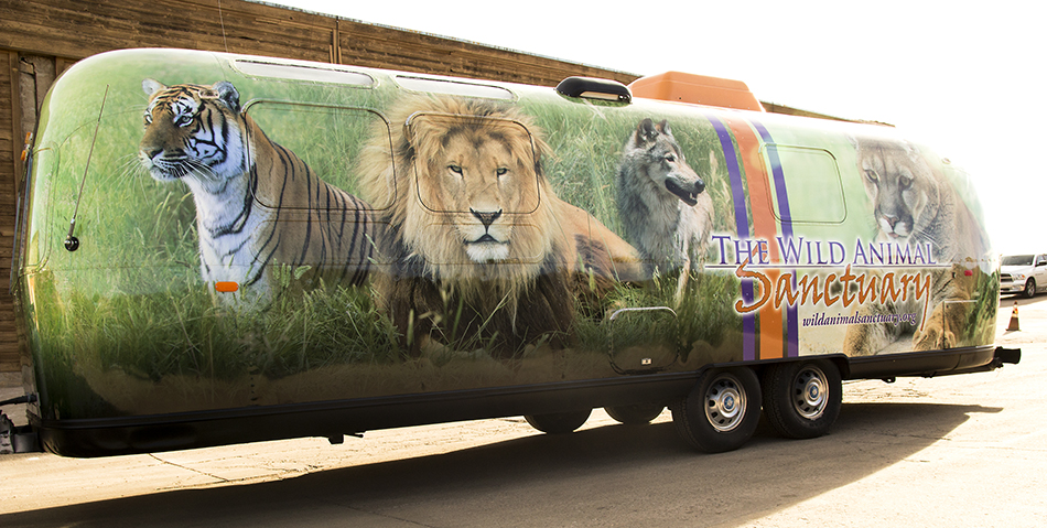 premium vehicle wraps in Colorado